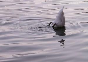 duck file000877095388